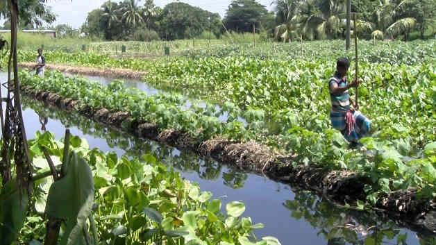 floating gardens of Bangladesh